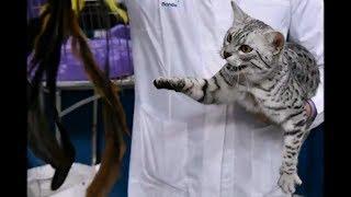 Такие непредсказуемые, ласковые и агрессивные, маленькие и большие, домашние кошки