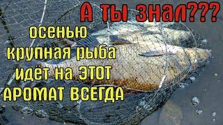 ЛОВИ ВСЮ ОСЕНЬ КРУПНУЮ РЫБУ Супер рыболовная насадка для карася леща карпа Рыбалка в Октябре