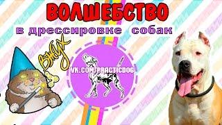 Волшебство в дрессировке собак | Дрессировка за 5 минут