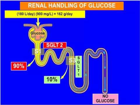 Mercodia Webinar Dr Ralph DeFronzo Glucagon Release with SGLT2 Inhibition