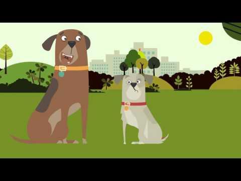 Join The Dog Food Revolution - Healthy Dog Food