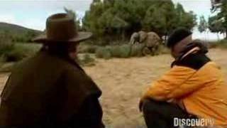 Mythbusters: Are elephants afraid of mice?