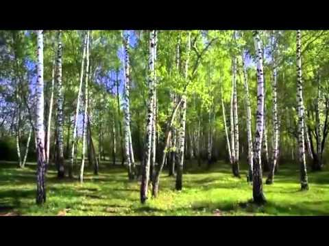 ты живи моя Россия - Бек вокал Минус - послушать онлайн в формате mp3 в отличном качестве