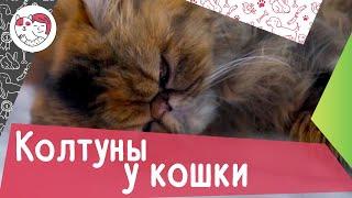 4 распространенных причины появления колтунов у кошки
