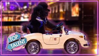 SMARTEST DOG Auditions Ever on Got Talent! | Top Talent