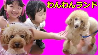 ★Zoo of the dog★ゴールドタワー「わんわんランド」で遊んだよ!★ thumbnail