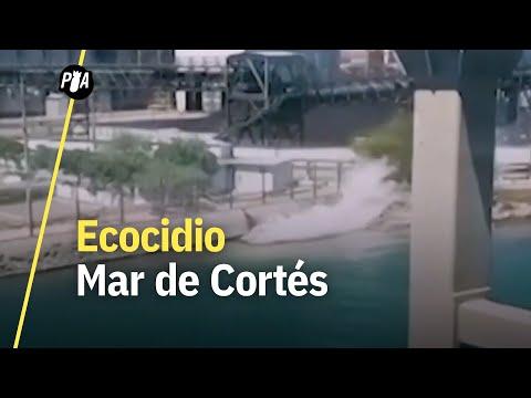 Ecocidio en Mar de Cortés: vierten miles de litros de ácido en reserva natural