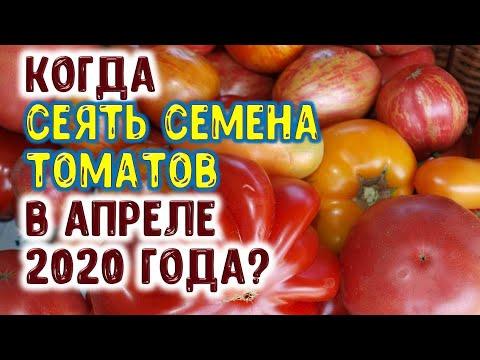 Вопрос: Когда сажать помидоры на рассаду в 2020 году?