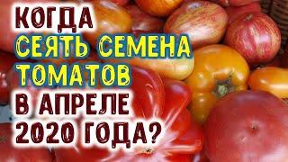 Когда сеять семена помидоров на рассаду, в открытый грунт в апреле 2020 года? Лучшие дни для томата