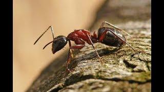 Проблема с муравьями решена на 100 . Башкирия. Ufamedok.ru