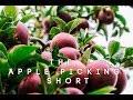 The Apple Picking Short