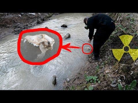Рыбалка в Чернобыле ПОЙМАЛИ НЕИЗВЕСТНОЕ СУЩЕСТВО