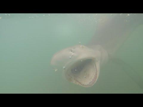 Ben Friedman - Vicious Fishes