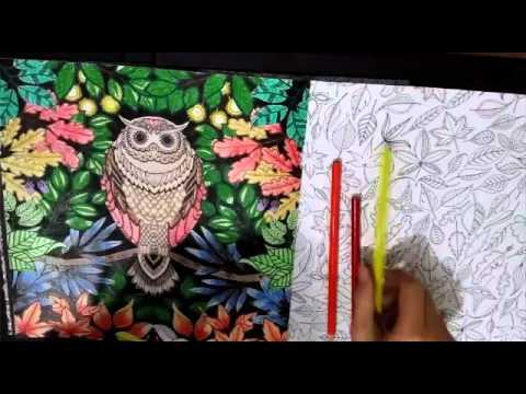 Esrarengiz Bahçe Baykuş Secret Garden Youtube