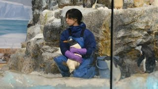 名古屋港水族館(名古屋市港区)で8月28日、一部ペンギンの移動作業...