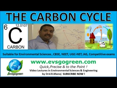 The Carbon Cycle made easy