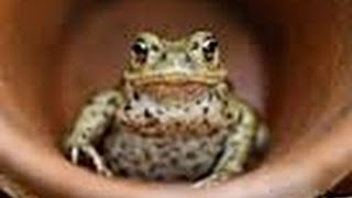 How to Setup an American Toad Tank