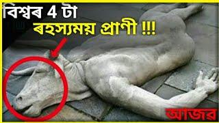 4 টা ৰহস্যময় জন্তু - Top 4 Mysterious creaturs in the world [Assamese] || Janu Ahok