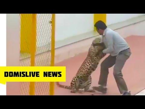 Leopard Attacks Indian School - 3 Mauled as Leopard Runs Wild