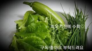 베란다텃밭 ♡비오기전에 수확해서 부추호박전 만들어서 먹…