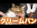 猫の足でクリームパン作ってみた!
