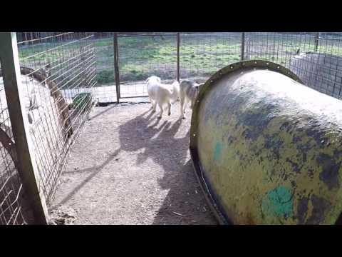 Phoenix Shelter Kennel Nr.  12