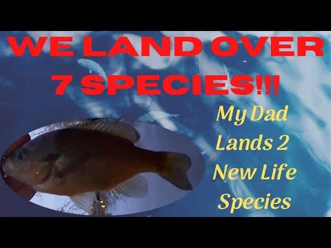 MultiSpecies Mania Maurice River Fishing With Abidomash Fishing