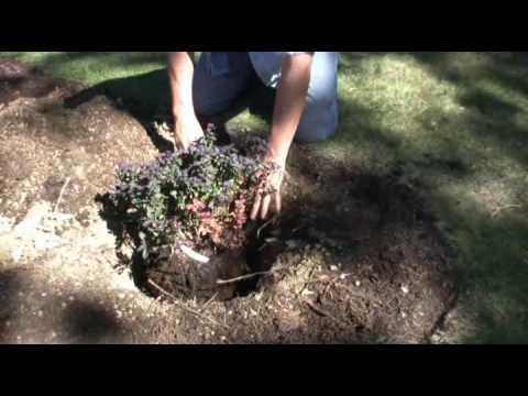 Hedging Poor Soil With Sweet Peet Youtube