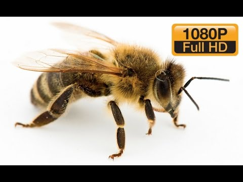 INCREDIBLE | Bees In Slow Motion