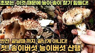 초보 송이버섯 능이버섯 무대뽀 발품산행 (feat.대물…