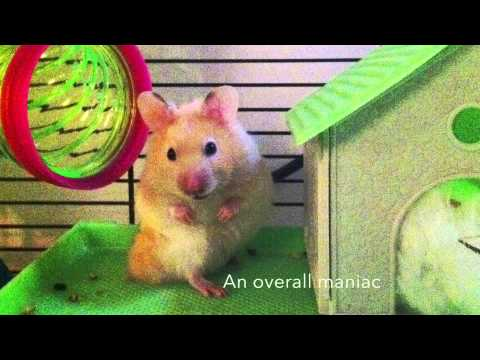RIP Humphrey the Hamster