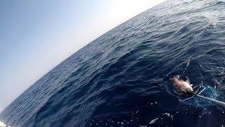 Ψαρεμα  στην Σκοπελο