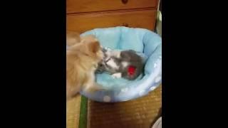 仲良しな犬と猫の動画に見えますが 最後の最後までCheckしてください!笑.