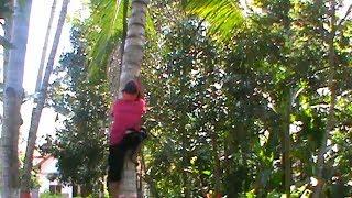 Gambar cover Seorang Ibu Jadi Buruh Pemajat Pohon Kelapa