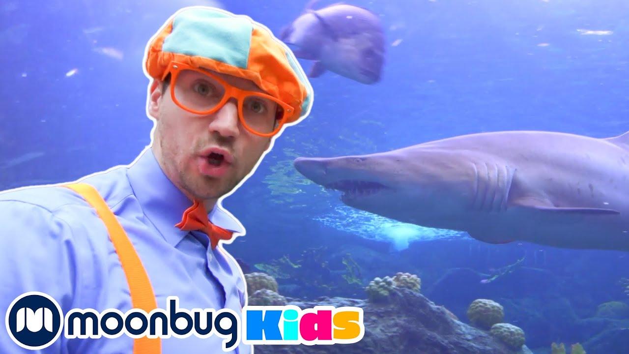 BLIPPI Visits an Aquarium | Kids Fun & Educational Cartoons | Moonbug Play and Learn