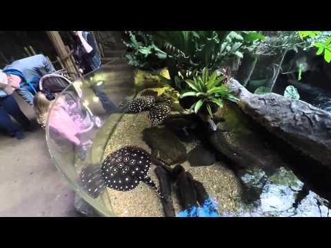 Dallas World Aquarium and Zoo, Dallas Texas - Family Travel Video