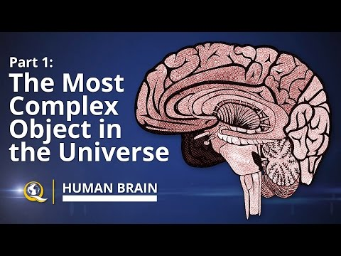 The Most Complex Object in the Universe - Human Brain Series - Part 1
