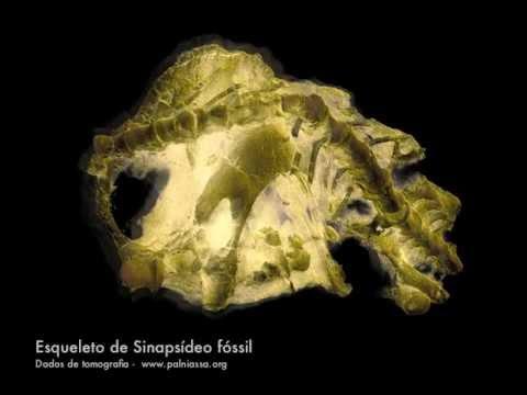 Niassodon mfumukasi (Castanhinha et al 2013, PLoS ONE)