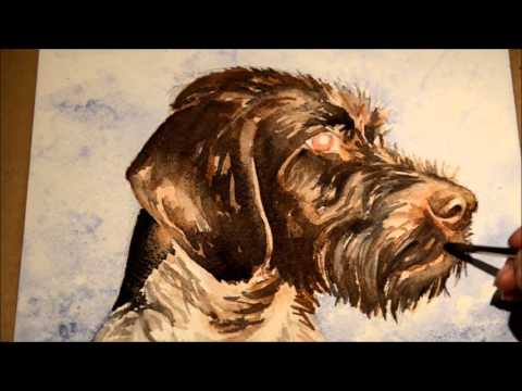 Watercolor portrait - german wirehaired pointer