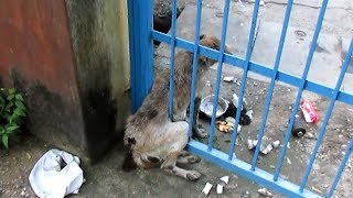 Baixar Badly wounded old dog stuck in gate rescued