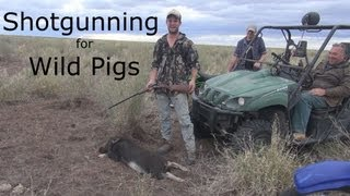 The best gun for hunting wild pigs in Australia Part 4 -shotguns