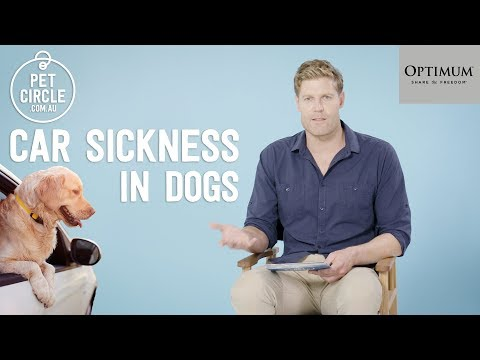 Dr Chris Brown Q&A: How To Stop Car Sickness In Dogs?