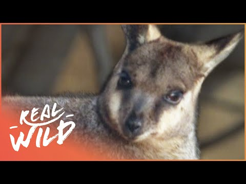 Deadly Protectors [South Australia Documentary] | Wild Things