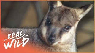 Deadly Protectors [South Australia Documentary] | Wild Things thumbnail