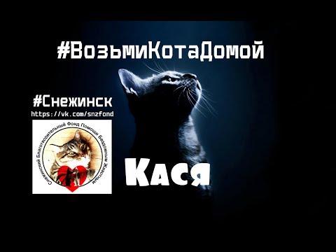 #ВозьмиКотаДомой! 😺 Кася 🐾🐾 (приют для котиков г. Снежинск)