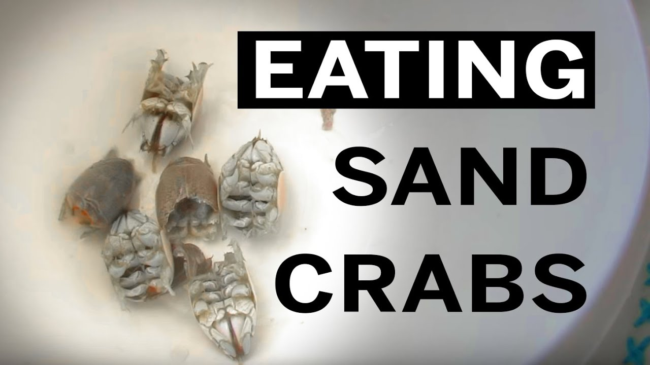 Cooking Island Hunting Cooking And Eating Sand Crabs Aka Mole Crabs Or