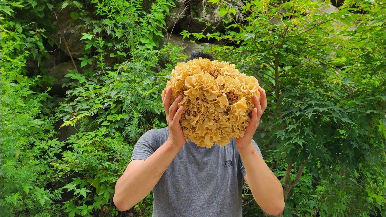 짜증나고 우울할땐 꽃송이버섯 산행을 해야합니다