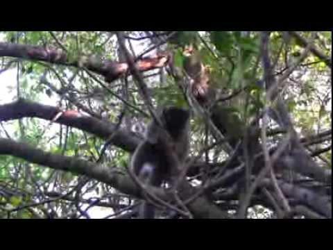 Madagascar land safari (Marinelife productions)