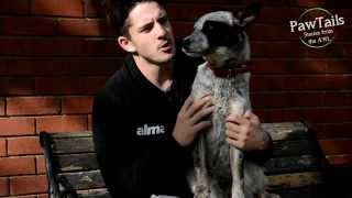 Awl Ambassador & Adelaide Crows Defender Matthew Jaensch And Elliot The Puppy