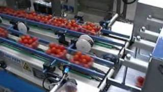 cherry tomatoes packing line
